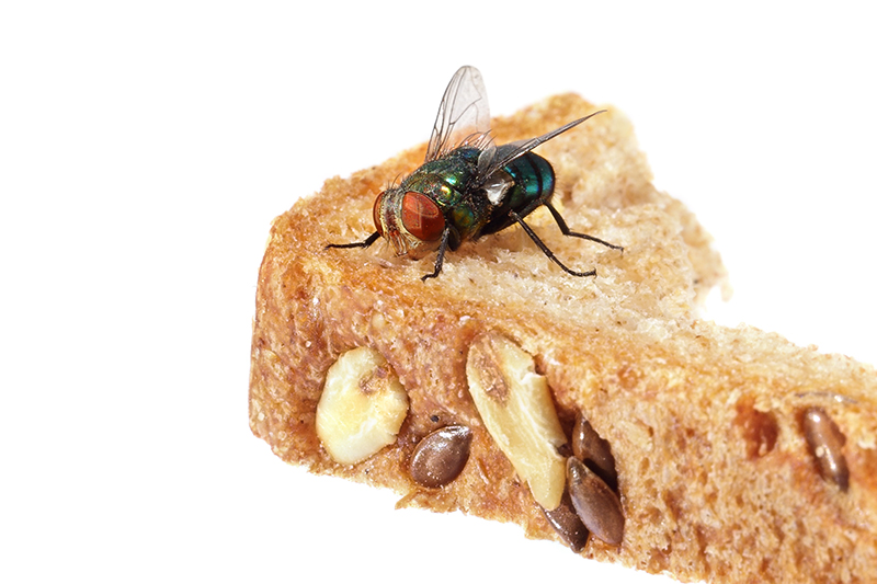 Fly Pest Control in Ealing Greater London
